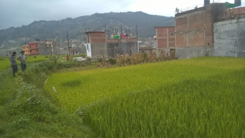 ramro-ghaderi-bikrima-in-banepa-area-big-1