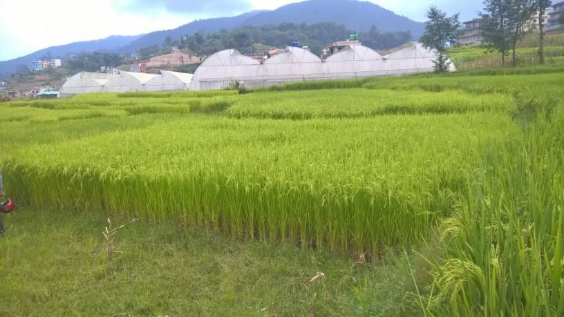 beautiful-land-ghaderi-for-sale-in-banepa-area-big-0