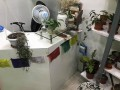plants-gift-shop-for-sale-small-2