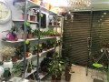 plants-gift-shop-for-sale-small-3