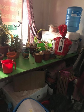 plants-gift-shop-for-sale-big-4