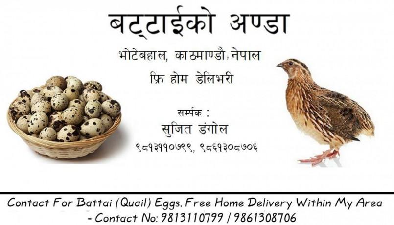 battai-eggs-big-0