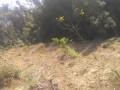 5-ropani-jagga-plotting-garna-milne-jagga-bikrima-small-3