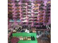 shoes-shop-for-sale-small-1