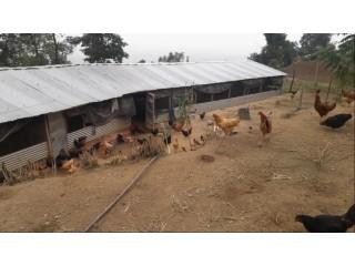 Poultry Farm बिक्रीमा