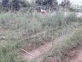 poultry-farm-b-small-2