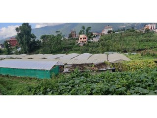 कृषि फार्म बिक्रीमा
