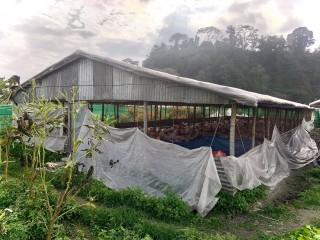 कुखुरा तथा कृषि फार्म सुलभ मुल्यमा बिक्रीमा