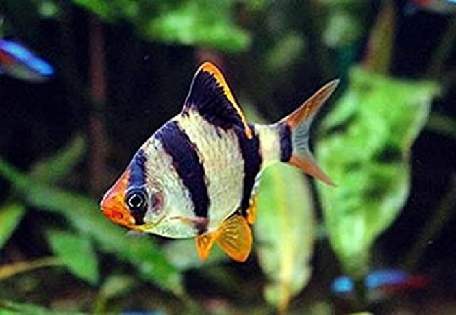 all-kind-of-fishes-big-4