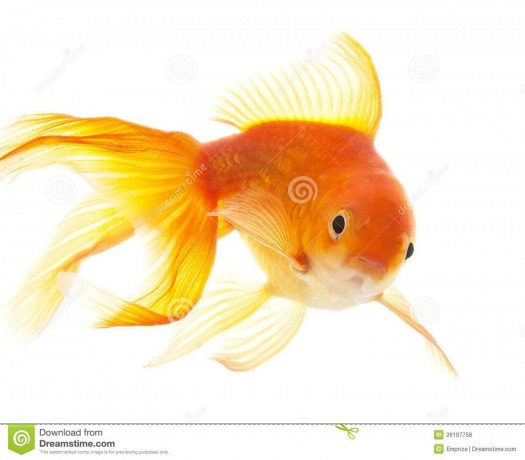 all-kind-of-fishes-big-0