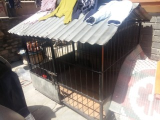 Big Size Iron Dog Cage Is On Sale