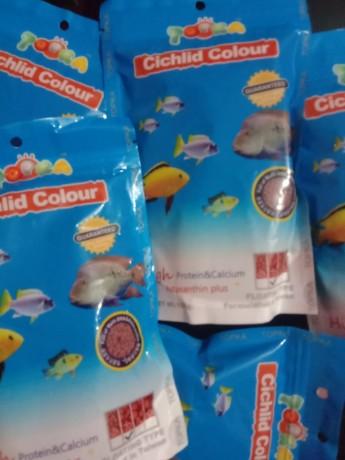 cichlid-color-food-big-0